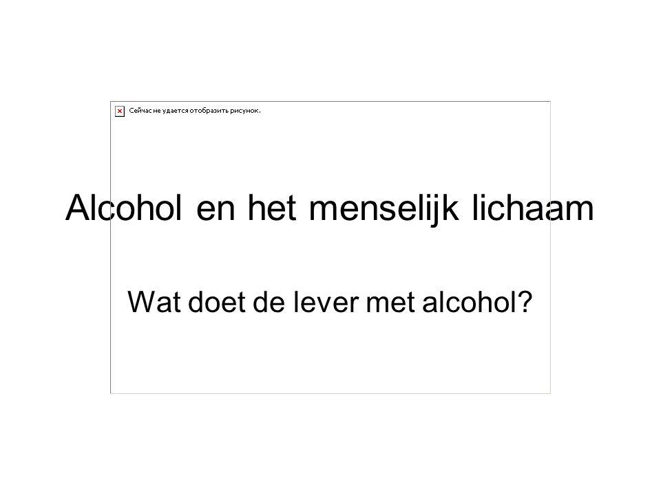 Alcohol en het menselijk lichaam Wat doet de lever met alcohol?