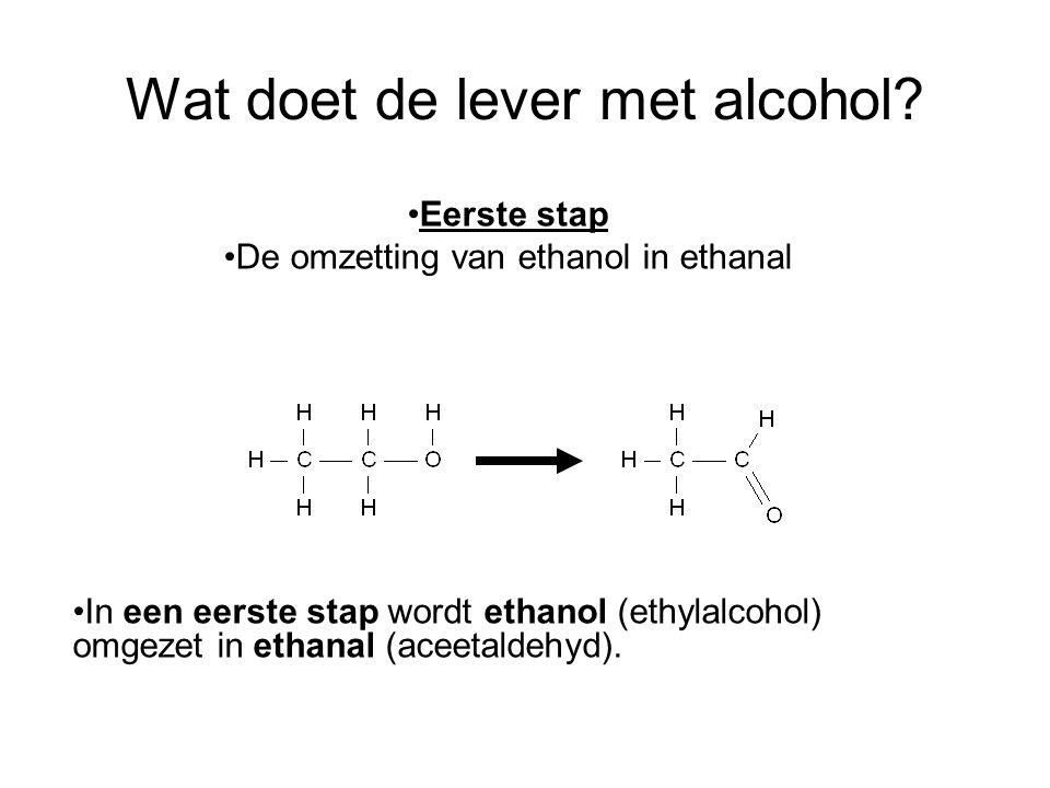 Wat doet de lever met alcohol? •In een eerste stap wordt ethanol (ethylalcohol) omgezet in ethanal (aceetaldehyd). •Eerste stap •De omzetting van etha
