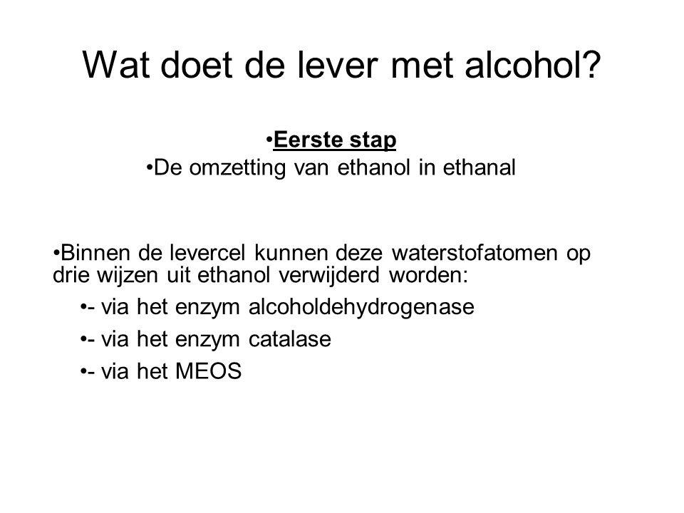 Wat doet de lever met alcohol? •Binnen de levercel kunnen deze waterstofatomen op drie wijzen uit ethanol verwijderd worden: •- via het enzym alcohold