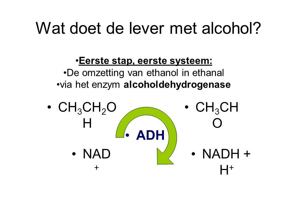 Wat doet de lever met alcohol? •CH 3 CH 2 O H •CH 3 CH O •NAD + •NADH + H + •ADH •Eerste stap, eerste systeem: •De omzetting van ethanol in ethanal •v