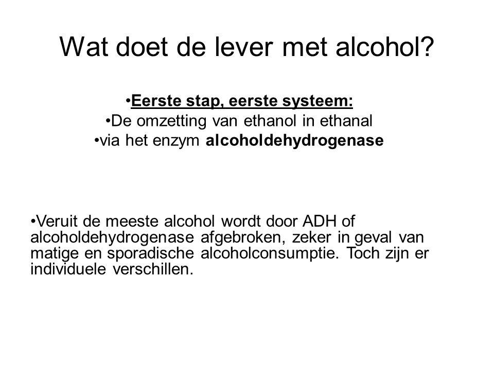 Wat doet de lever met alcohol? •Eerste stap, eerste systeem: •De omzetting van ethanol in ethanal •via het enzym alcoholdehydrogenase •Veruit de meest