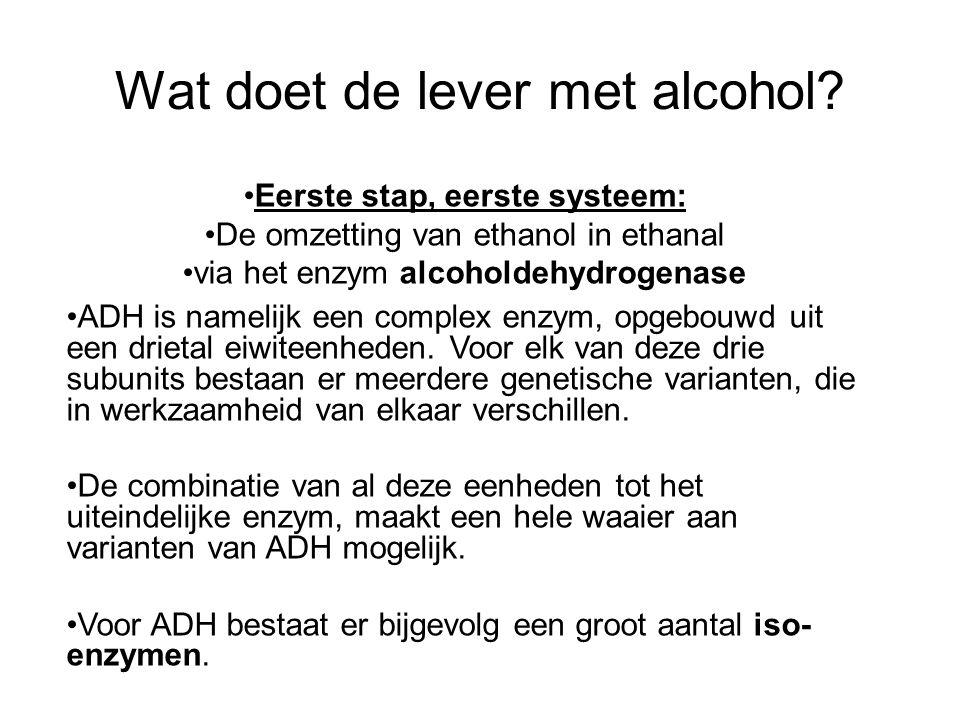 Wat doet de lever met alcohol? •Eerste stap, eerste systeem: •De omzetting van ethanol in ethanal •via het enzym alcoholdehydrogenase •ADH is namelijk