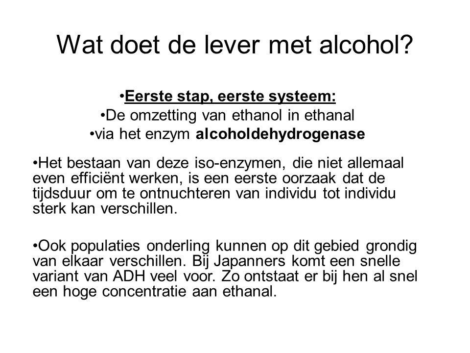 Wat doet de lever met alcohol? •Eerste stap, eerste systeem: •De omzetting van ethanol in ethanal •via het enzym alcoholdehydrogenase •Het bestaan van