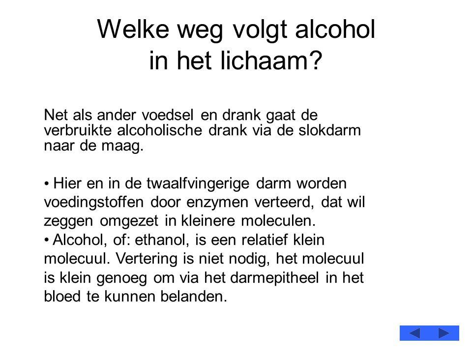 Welke weg volgt alcohol in het lichaam? Net als ander voedsel en drank gaat de verbruikte alcoholische drank via de slokdarm naar de maag. • Hier en i