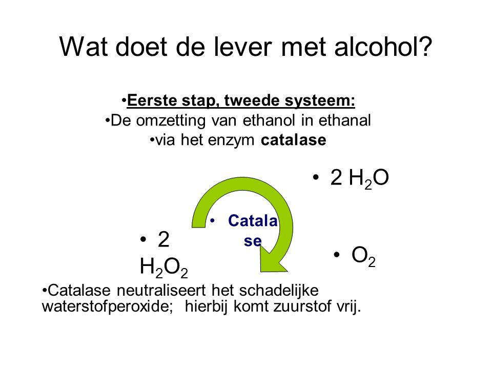 Wat doet de lever met alcohol? •2 H 2 O •2H2O2•2H2O2 •O2•O2 •Catala se •Catalase neutraliseert het schadelijke waterstofperoxide; hierbij komt zuursto