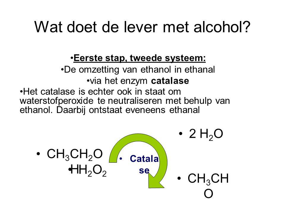 Wat doet de lever met alcohol? •Het catalase is echter ook in staat om waterstofperoxide te neutraliseren met behulp van ethanol. Daarbij ontstaat eve