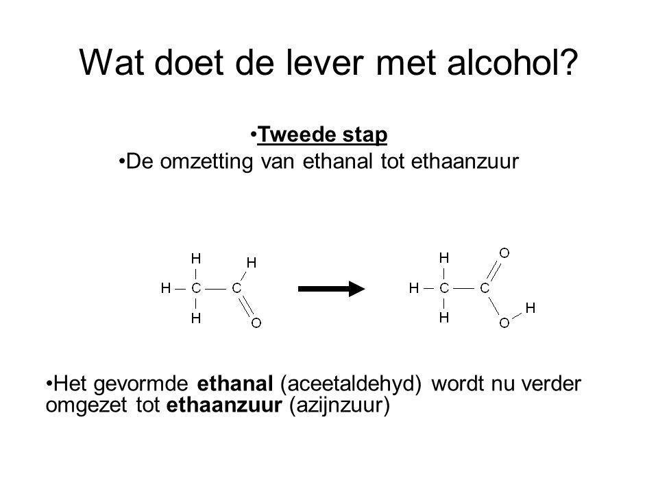 Wat doet de lever met alcohol? •Het gevormde ethanal (aceetaldehyd) wordt nu verder omgezet tot ethaanzuur (azijnzuur) •Tweede stap •De omzetting van