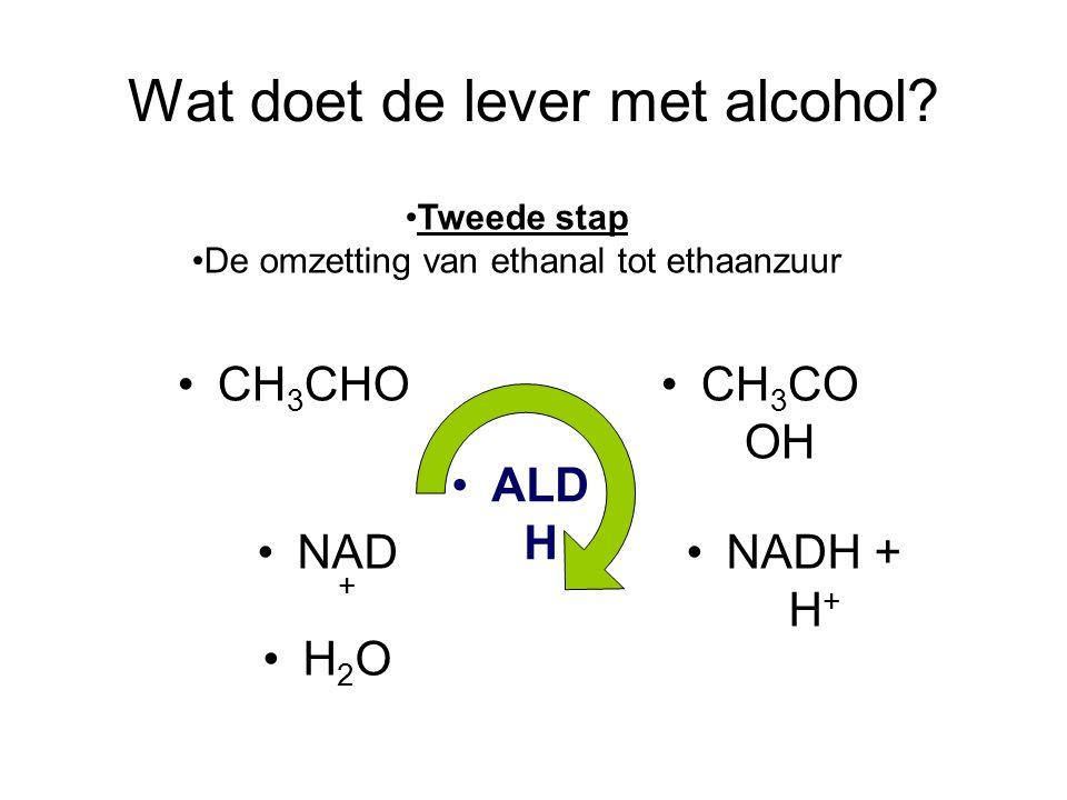 Wat doet de lever met alcohol? •CH 3 CHO•CH 3 CO OH •NAD + •H2O•H2O •NADH + H + •ALD H •Tweede stap •De omzetting van ethanal tot ethaanzuur