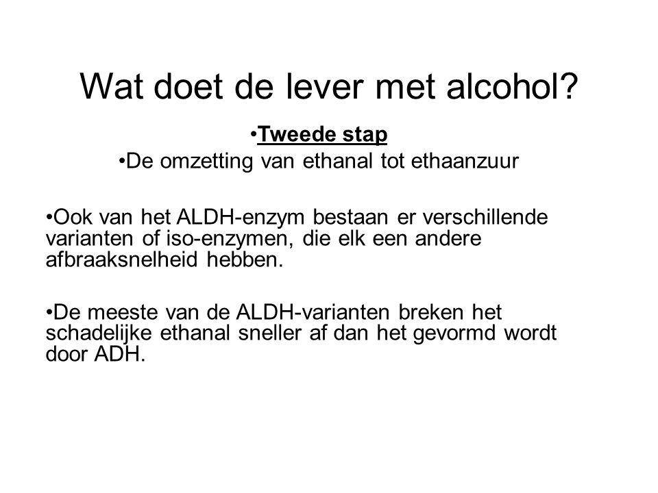 Wat doet de lever met alcohol? •Tweede stap •De omzetting van ethanal tot ethaanzuur •Ook van het ALDH-enzym bestaan er verschillende varianten of iso