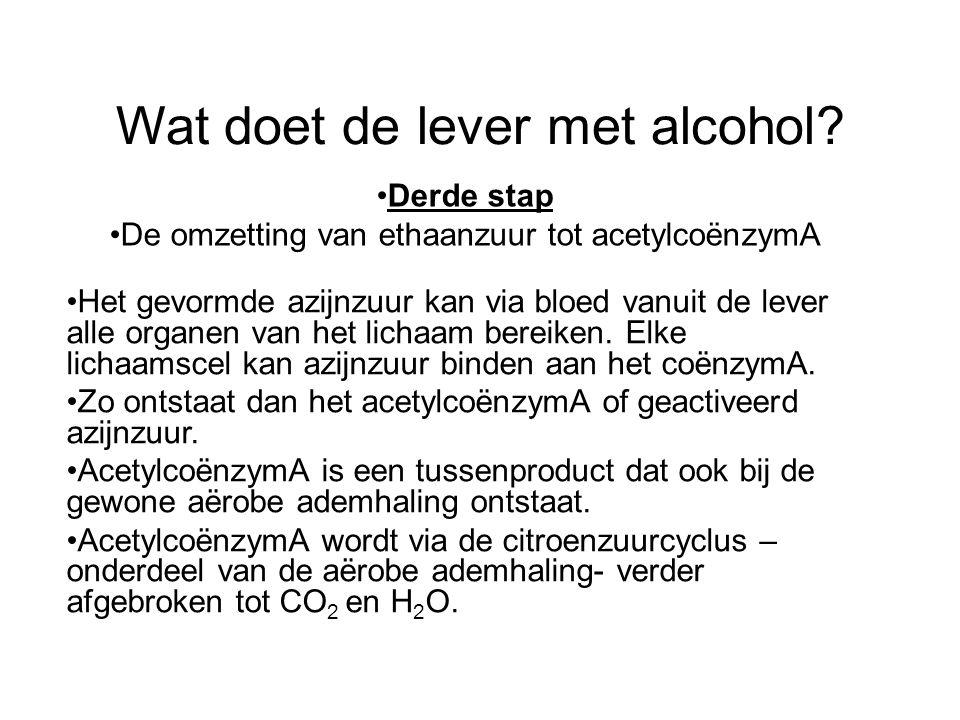 Wat doet de lever met alcohol? •Derde stap •De omzetting van ethaanzuur tot acetylcoënzymA •Het gevormde azijnzuur kan via bloed vanuit de lever alle