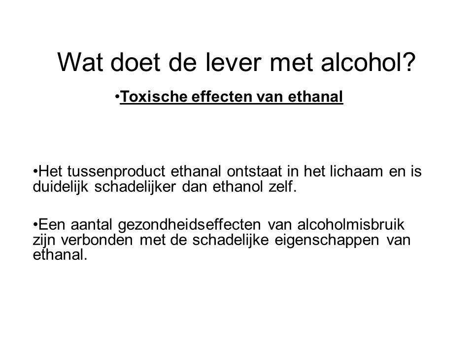 Wat doet de lever met alcohol? •Toxische effecten van ethanal •Het tussenproduct ethanal ontstaat in het lichaam en is duidelijk schadelijker dan etha