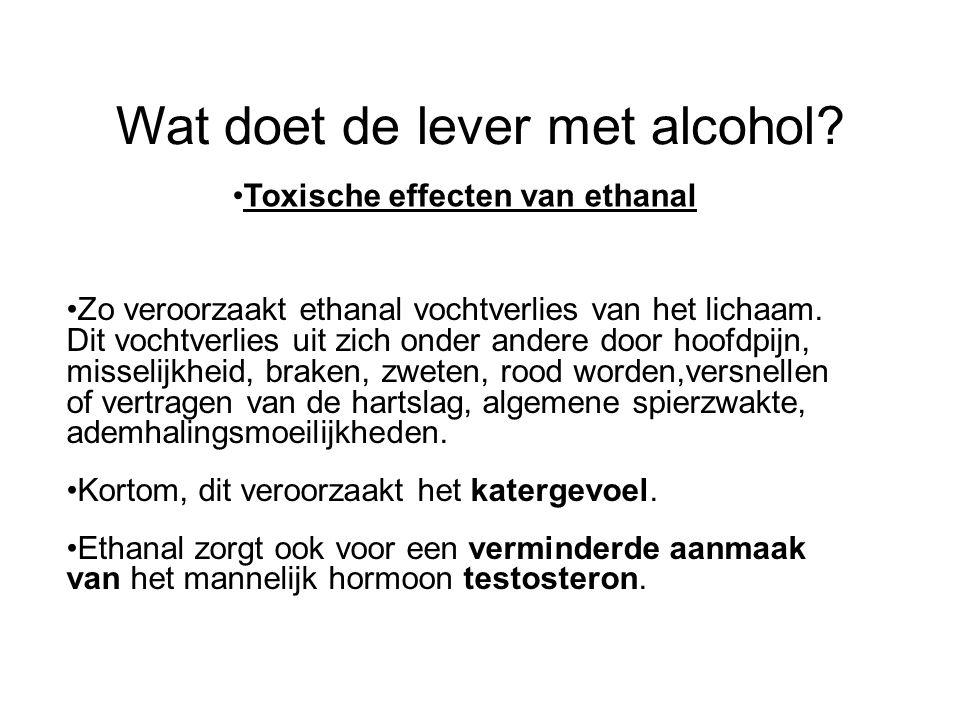 Wat doet de lever met alcohol? •Toxische effecten van ethanal •Zo veroorzaakt ethanal vochtverlies van het lichaam. Dit vochtverlies uit zich onder an