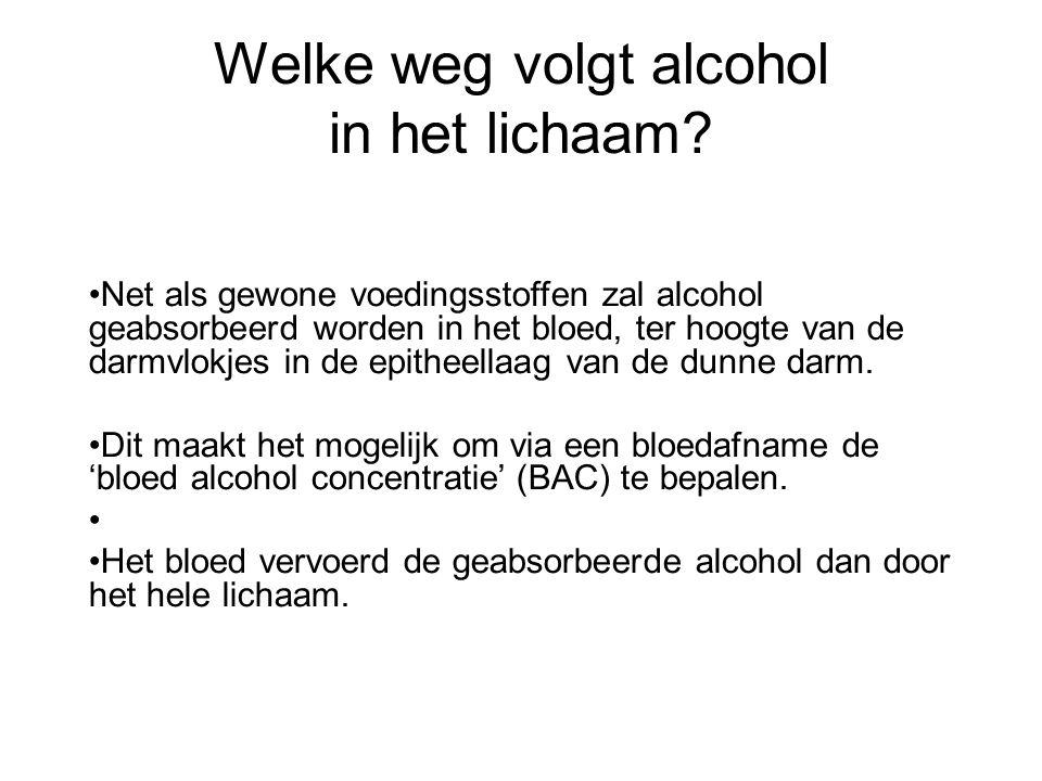 Welke weg volgt alcohol in het lichaam? •Net als gewone voedingsstoffen zal alcohol geabsorbeerd worden in het bloed, ter hoogte van de darmvlokjes in