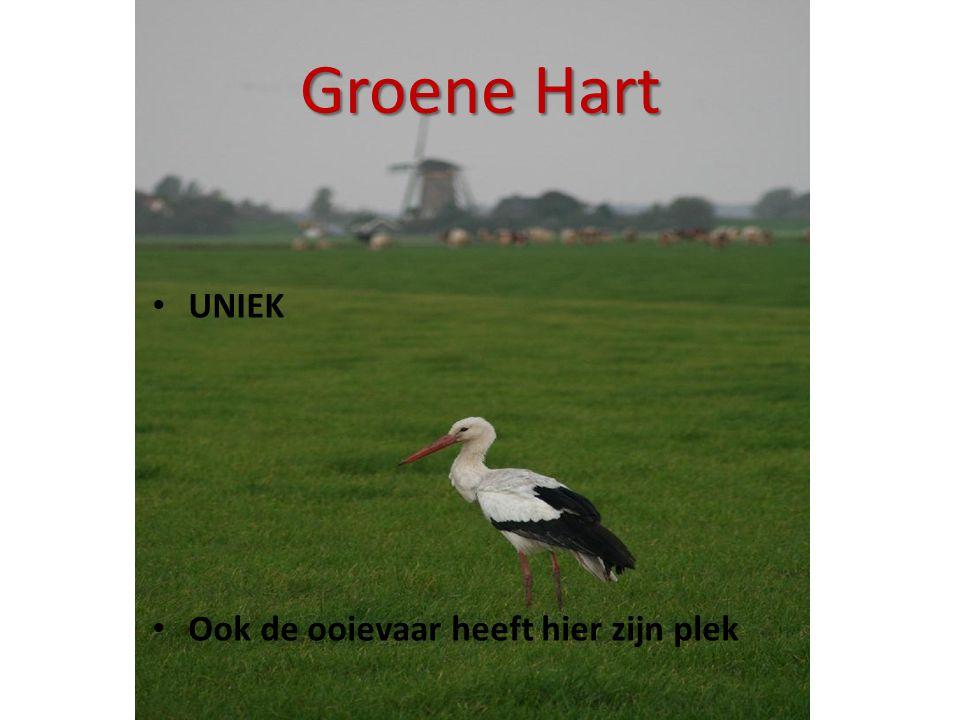 Groene Hart • UNIEK • Ook de ooievaar heeft hier zijn plek