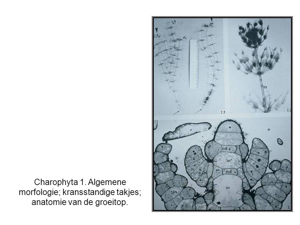 Charophyta 1. Algemene morfologie; kransstandige takjes; anatomie van de groeitop.