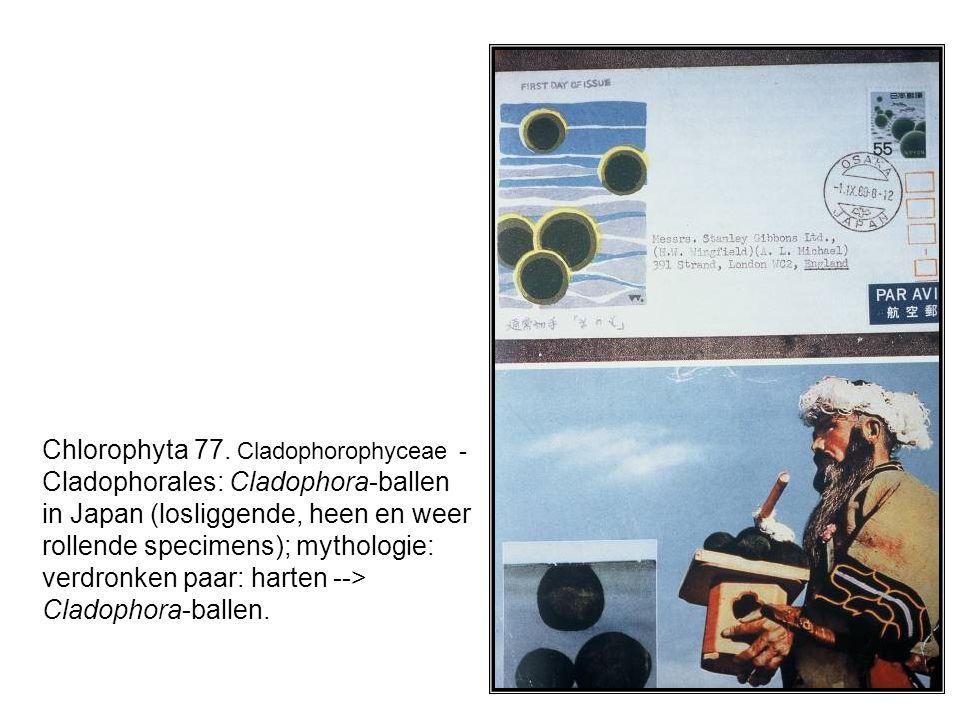 Chlorophyta 77. Cladophorophyceae - Cladophorales: Cladophora-ballen in Japan (losliggende, heen en weer rollende specimens); mythologie: verdronken p