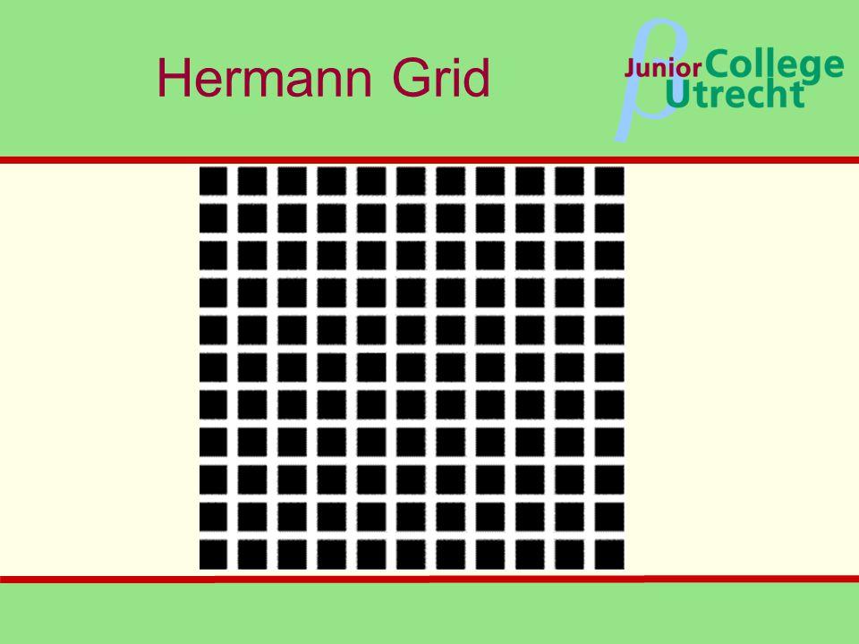 β Hermann Grid