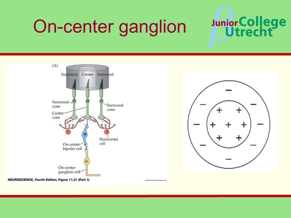 β On-center ganglion
