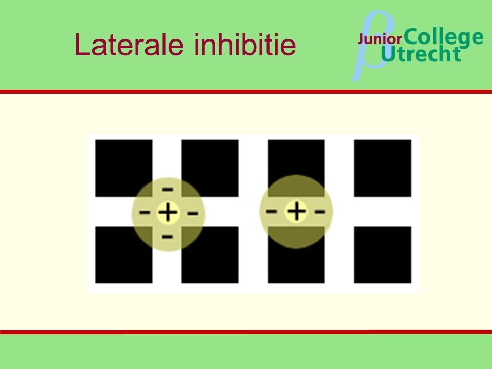 β Laterale inhibitie