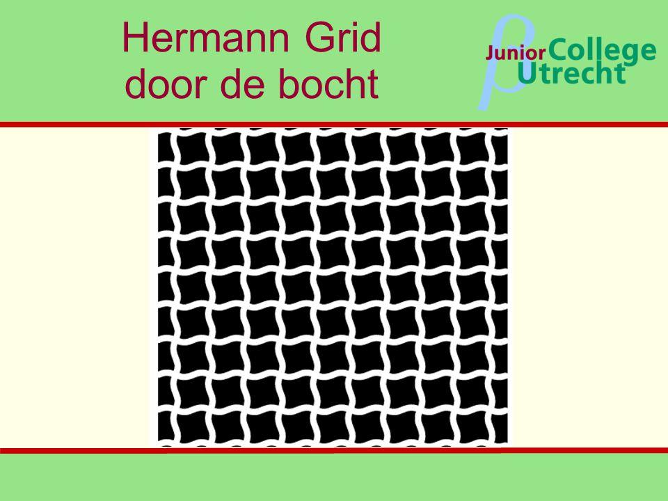 β Hermann Grid door de bocht