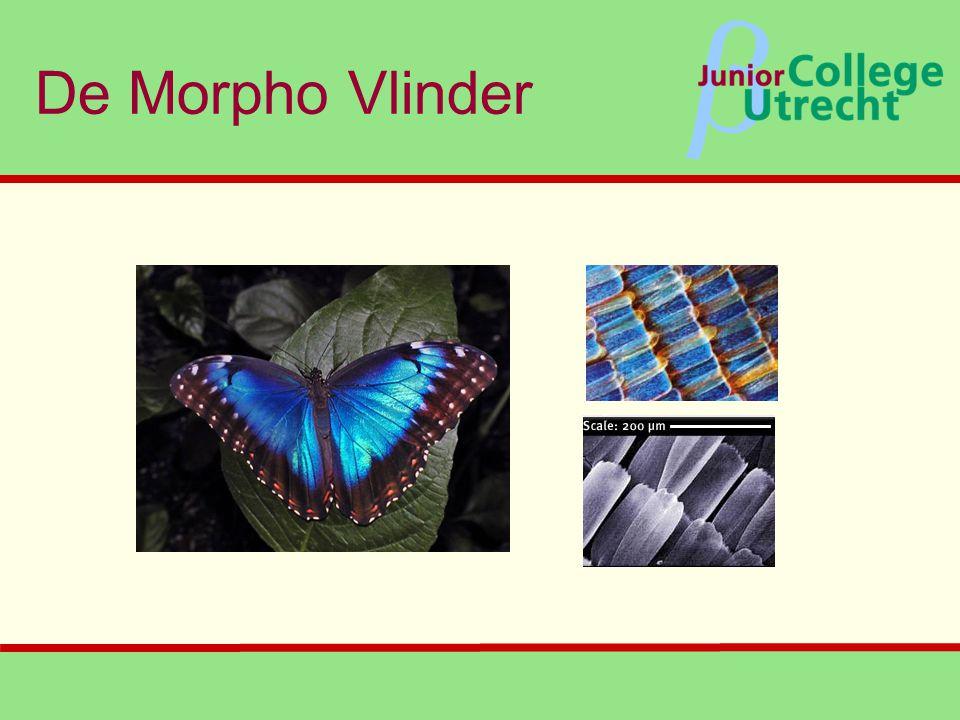 β De Morpho Vlinder