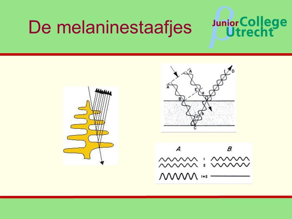 β De melaninestaafjes