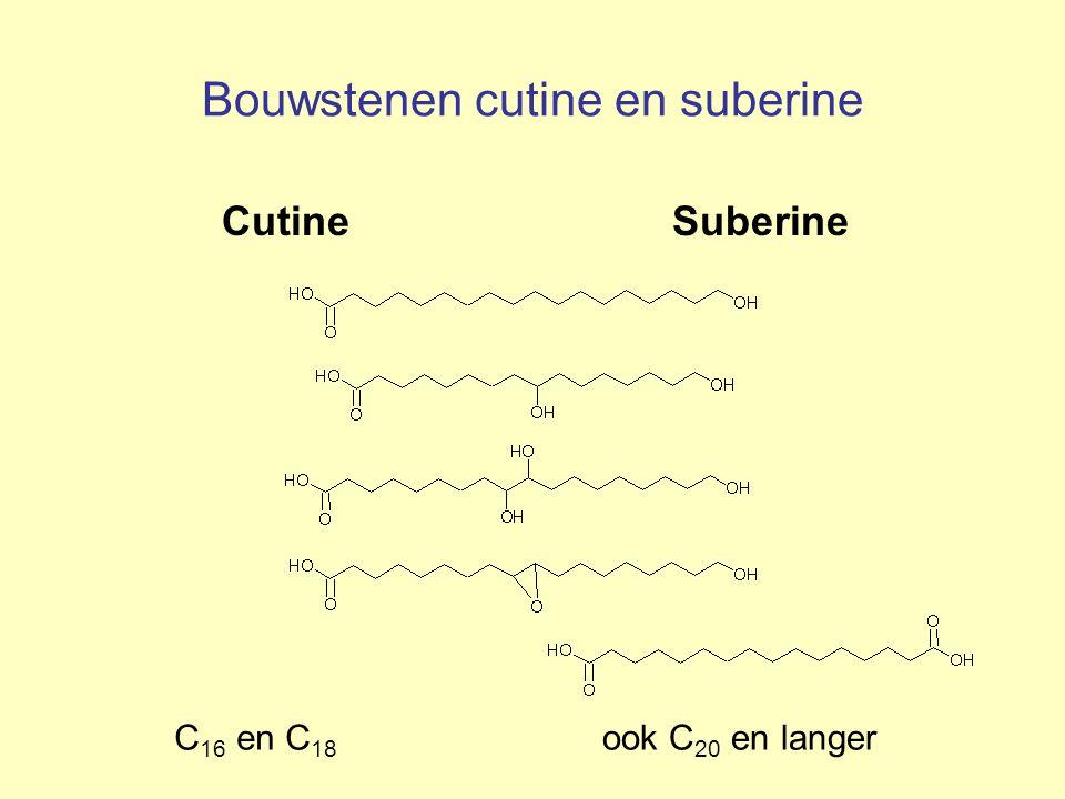 Bouwstenen cutine en suberine Cutine Suberine C 16 en C 18 ook C 20 en langer