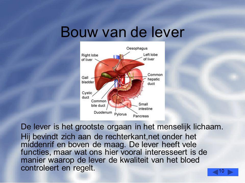 10 Bouw van de lever De lever is het grootste orgaan in het menselijk lichaam.