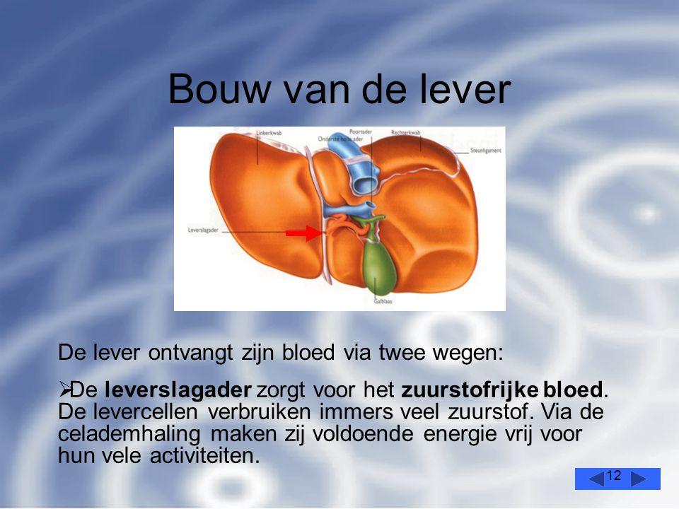 12 Bouw van de lever De lever ontvangt zijn bloed via twee wegen:  De leverslagader zorgt voor het zuurstofrijke bloed.