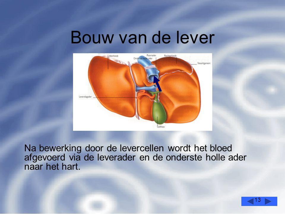 13 Bouw van de lever Na bewerking door de levercellen wordt het bloed afgevoerd via de leverader en de onderste holle ader naar het hart.