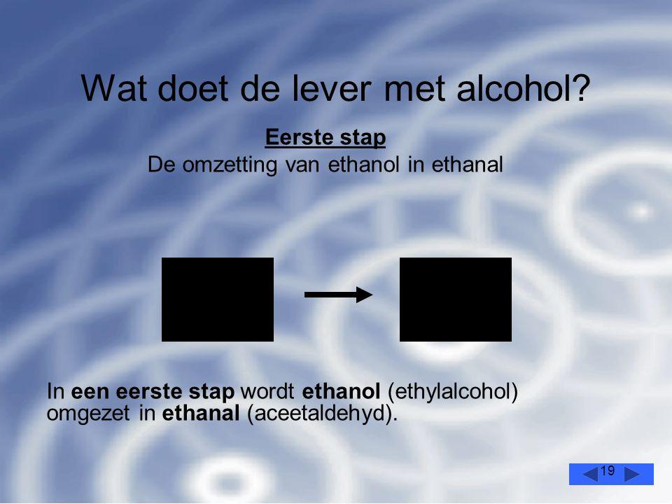19 Wat doet de lever met alcohol.