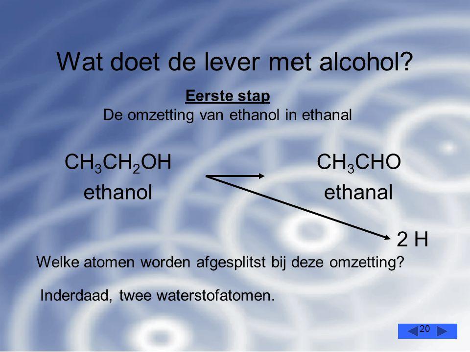 20 Wat doet de lever met alcohol.