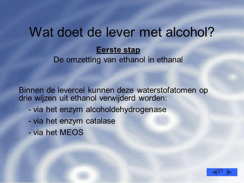21 Wat doet de lever met alcohol.