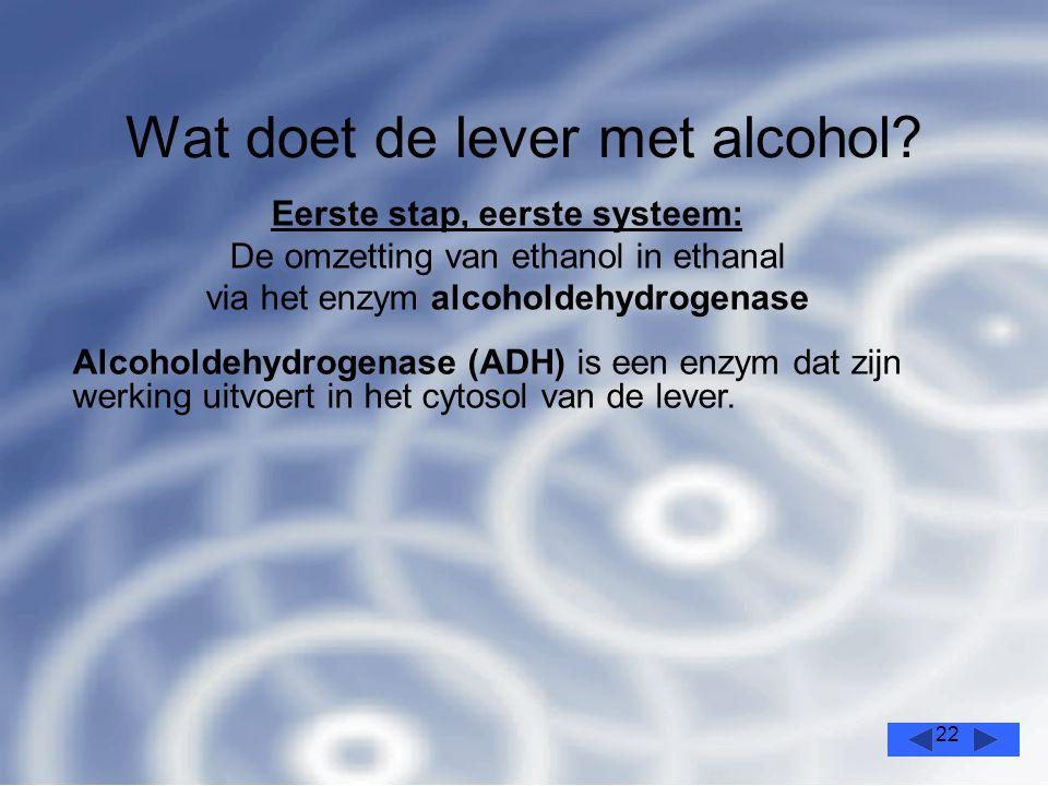 22 Wat doet de lever met alcohol.