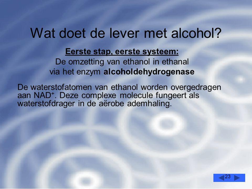 23 Wat doet de lever met alcohol.