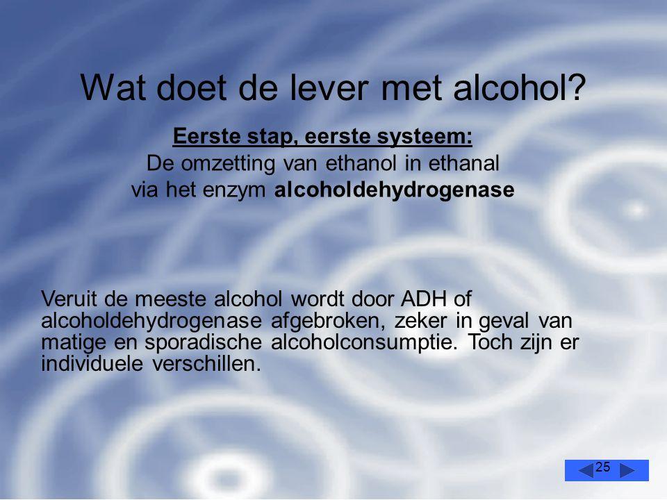 25 Wat doet de lever met alcohol.