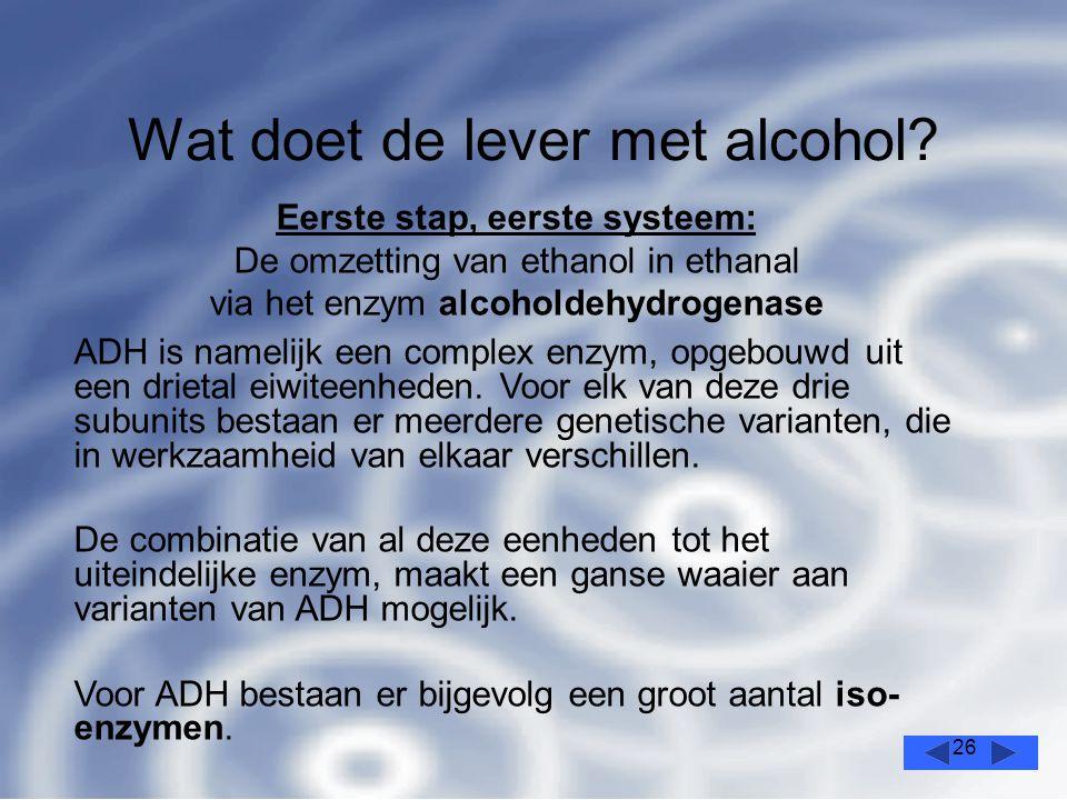 26 Wat doet de lever met alcohol.