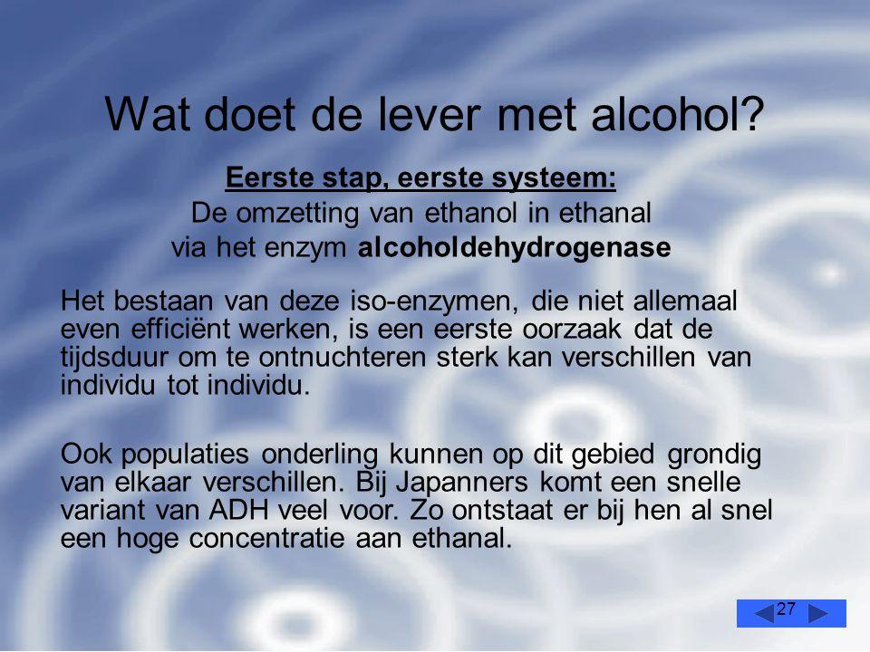 27 Wat doet de lever met alcohol.