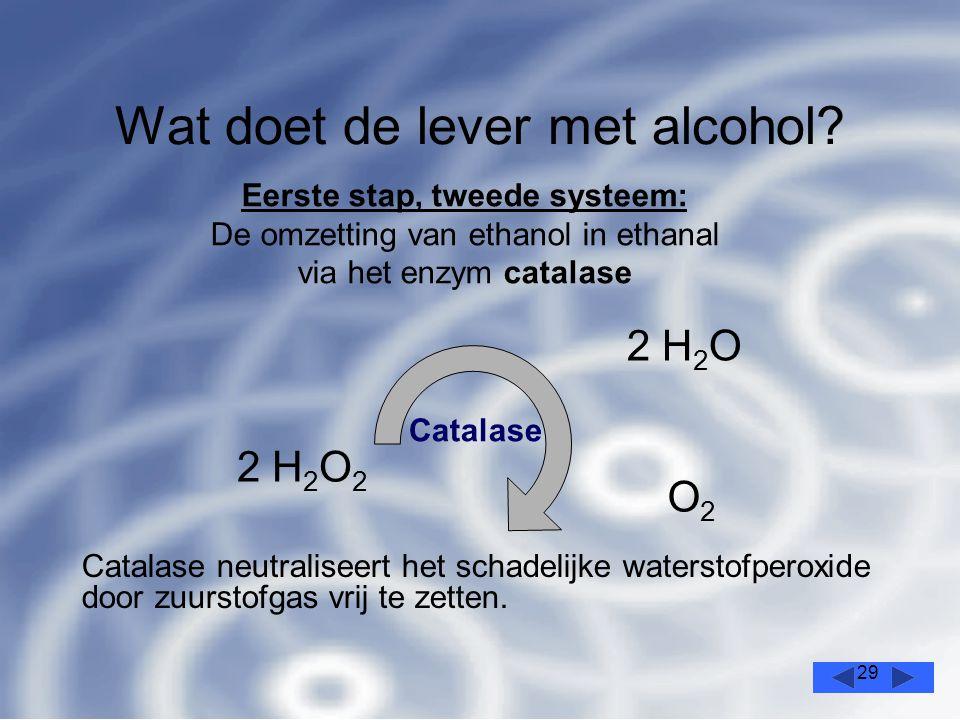 29 Wat doet de lever met alcohol.
