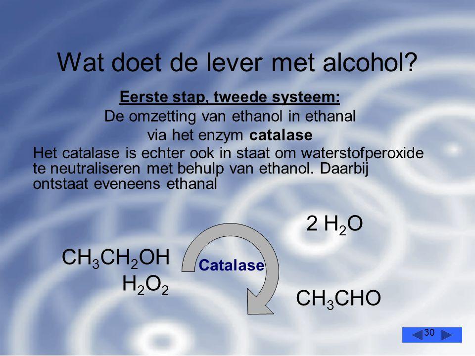 30 Wat doet de lever met alcohol.