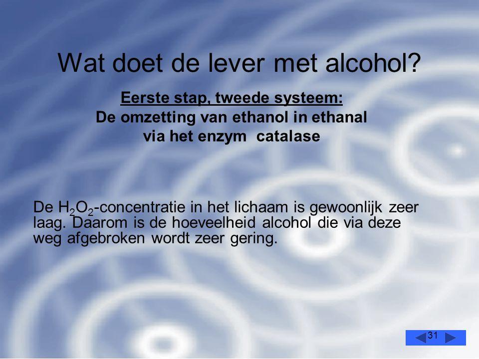 31 Wat doet de lever met alcohol.De H 2 O 2 -concentratie in het lichaam is gewoonlijk zeer laag.