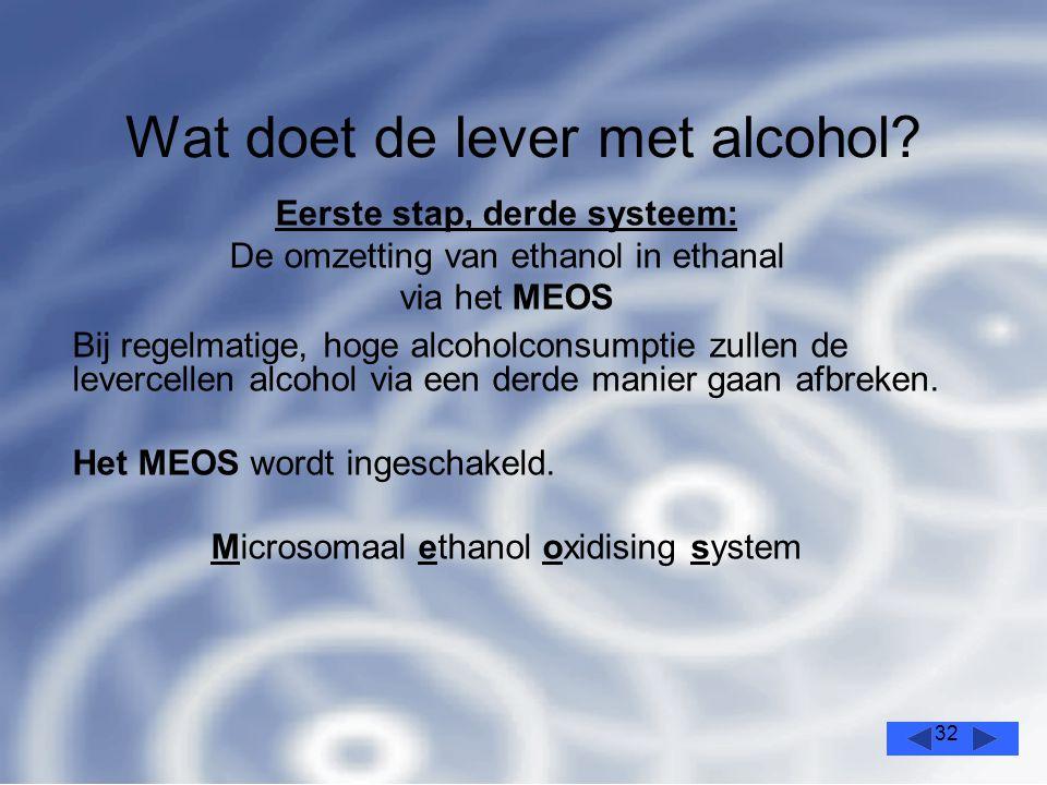 32 Wat doet de lever met alcohol.