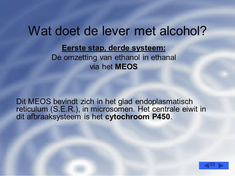 33 Wat doet de lever met alcohol.