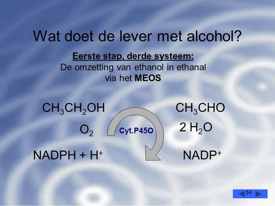 34 Wat doet de lever met alcohol.