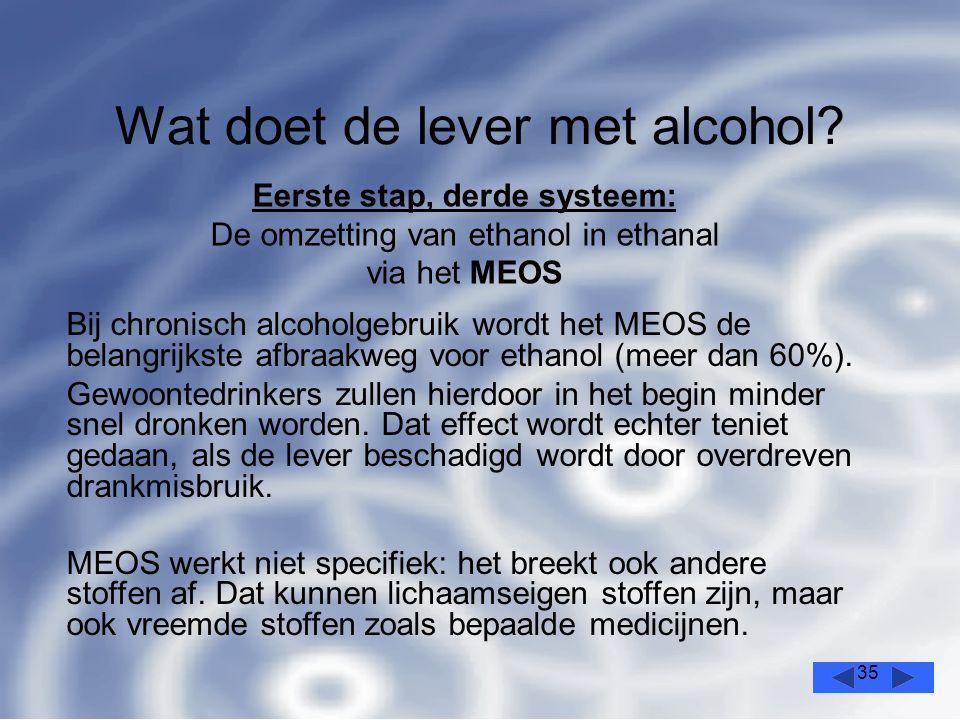 35 Wat doet de lever met alcohol.
