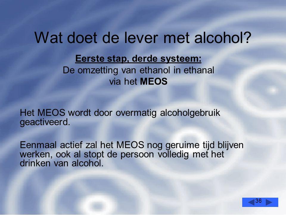 36 Wat doet de lever met alcohol.Het MEOS wordt door overmatig alcoholgebruik geactiveerd.