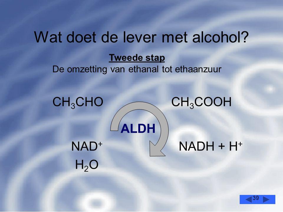 39 Wat doet de lever met alcohol.