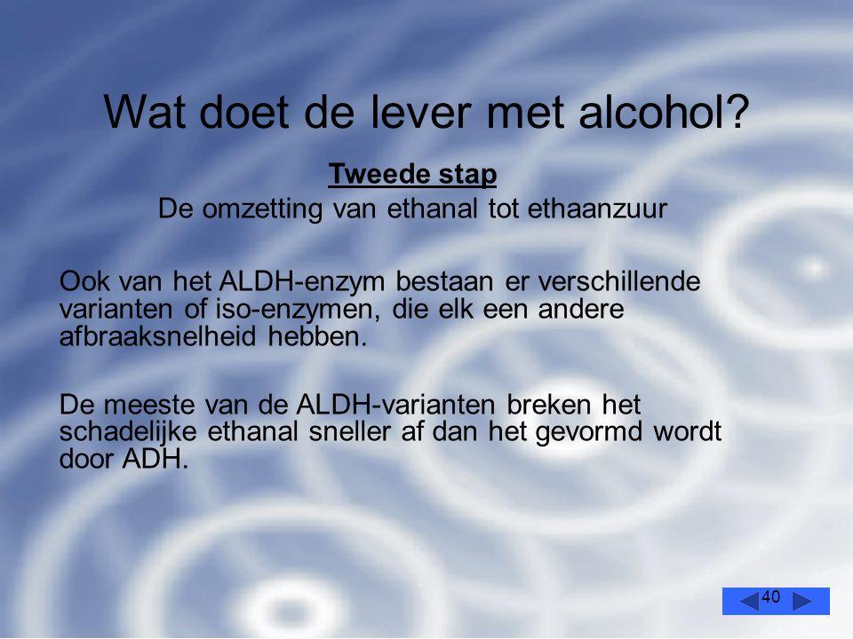 40 Wat doet de lever met alcohol.