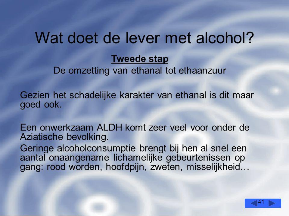 41 Wat doet de lever met alcohol.