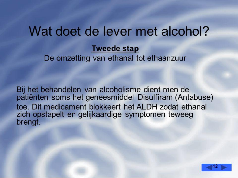 42 Wat doet de lever met alcohol.